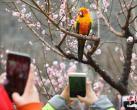 2019北京明城墙遗址公园第十二届梅花文化节开幕