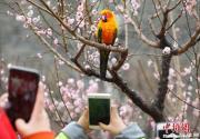2019北京明城墻遺址公園第十二屆梅花文化節開幕