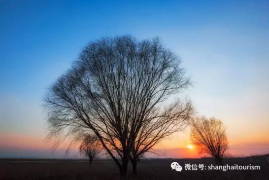 上海十大最美湿地都在这里,来看魔都自然风光