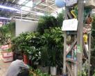 莱太花卉市场下月将闭市改造,商户甩货撤摊