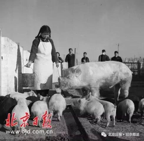 """还记得北京南中轴上的那颗""""红星""""吗?要建一座大公园来纪念它[墙根网]"""
