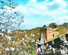 三月不必下扬州 津冀也有好风景