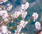 颐和园桃花什么时候开?3月进入最佳观赏期