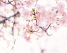 上海市区这些小众赏樱地即将迎来最美时光 全都免费哦!