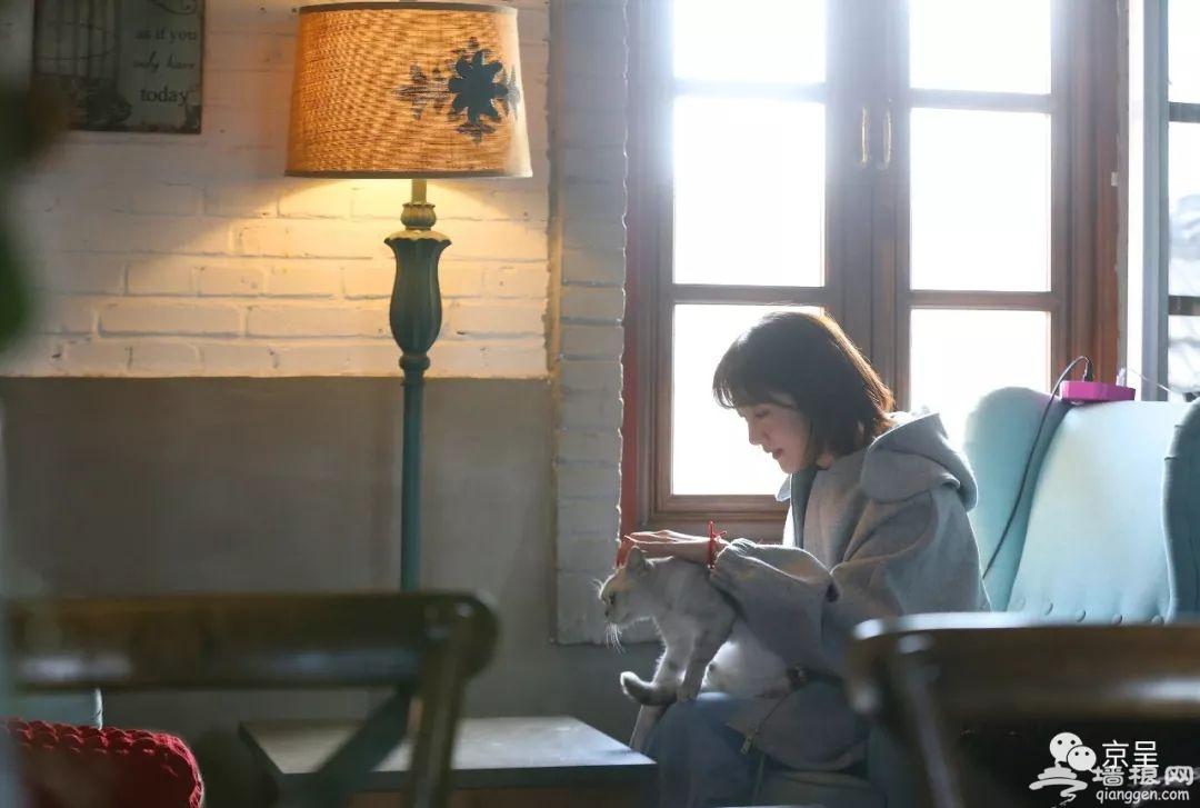 """喵客 北京什刹海的""""乌托邦"""" 但聚在这儿看电影品咖啡的却是猫咪[墙根网]"""