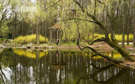 共青森林公园开启踏春赏花模式 周末迎近5万游客