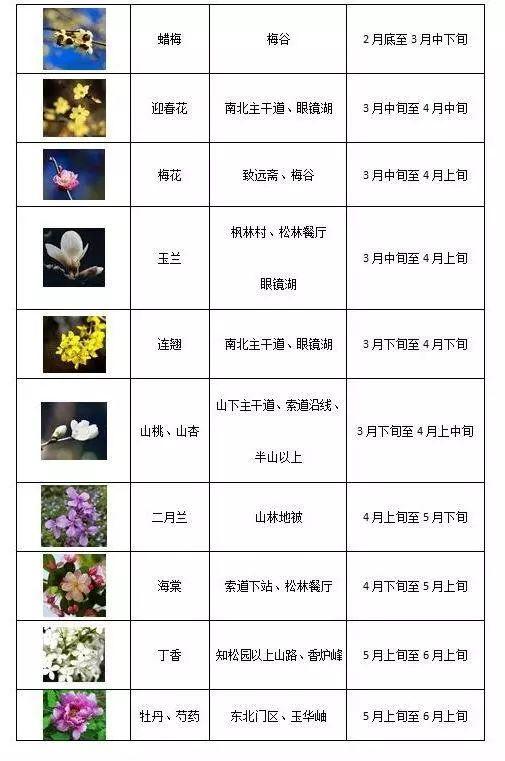 2019北京香山公园赏花攻略(花期+线路+亮点)[墙根网]