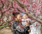 北京推140处赏花片区43项文化活动