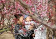 北京推140處賞花片區43項文化活動
