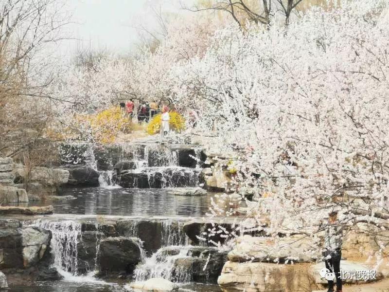 """北京植物园的桃花开了!打卡赏花""""网红景区""""看这里[墙根网]"""