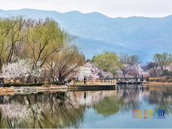2019第31届北京植物园桃花节赏桃花(时间+线路+交通)[墙根网]