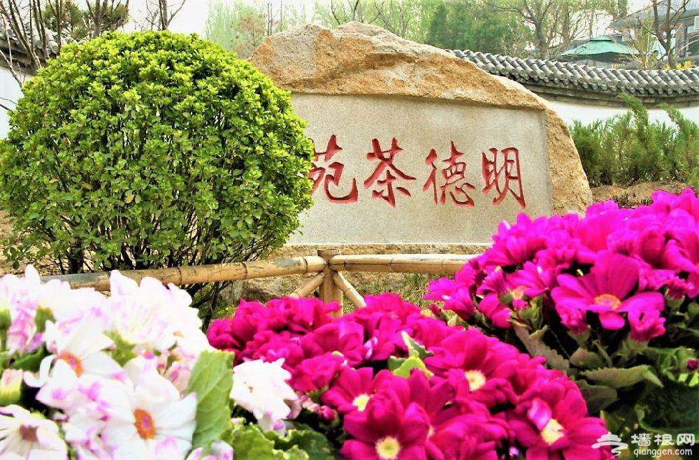 2019年凤凰岭第十九届杏花节3月底将开幕