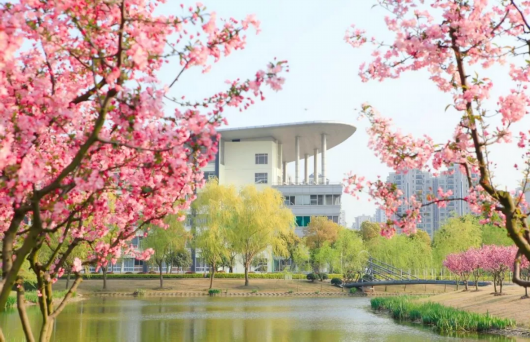 上海高校春意浓!一起来看32所校园的明媚春光[墙根网]