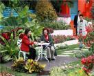 """上海(国际)花展开幕在即 """"当家花旦""""扮靓整个春天"""