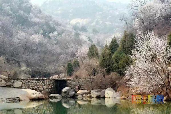 错过就没了!!北京这片桃花林悄悄盛开啦![墙根网]