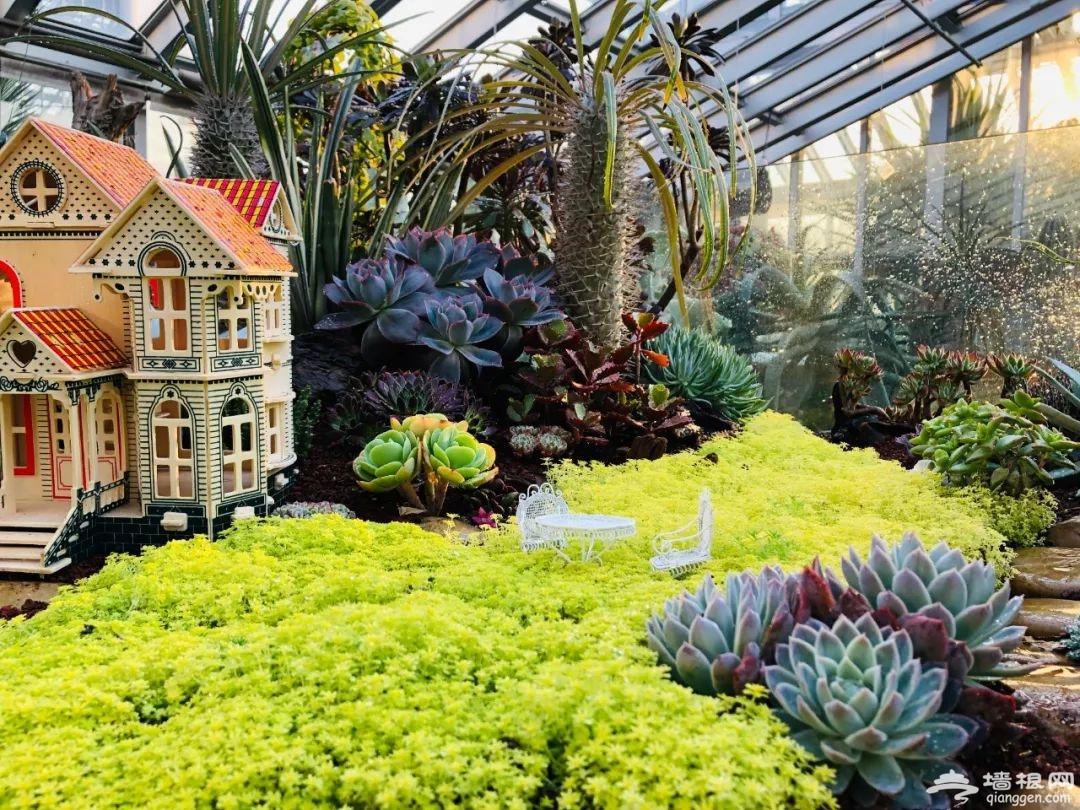 最新网红打卡地竟藏在上海植物园,快到上海(国际)花展一探究竟[墙根网]