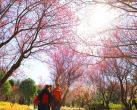 """北京这10处市属公园正花香四溢,还有10种""""春花文创"""""""
