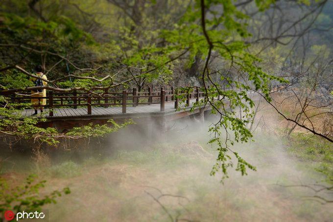 """北京清明踏青好去处 北京植物园""""雾里看花""""[墙根网]"""
