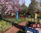 北京香山公园浪漫山花进入观赏期 首次推出三大科普体验