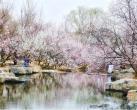 2019北京植物园桃花节,喷雾景观仿若仙境