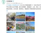 北京这几个地方美成仙境,花开十里只为你 ~