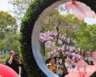 本周三至5月5日 蓝色梦幻花海首现滨江森林公园杜鹃花展