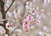 想体验22万亩桃花海?平谷桃花节开幕,赏花路线看这个就对了!