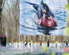 北京将台乡绿化覆盖率增加10%,将府公园举办森林绿站影像季