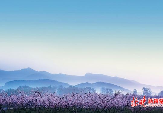 北京平谷桃花绽放,22万亩粉红大地等你来