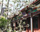 市属公园再迎花潮丁香海棠绽放 植物园近千株海棠同时盛放