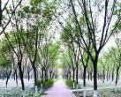 北京温榆河绿道朝阳段比较隐蔽,属于郊野型绿道很适合骑行