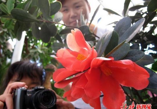 北京植物园神州奇珍展亮相北京世园会 300种珍稀植物将被展示