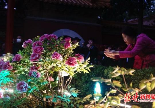 夜赏牡丹!北京景山公园开启夜游模式,感受别样光影幻境