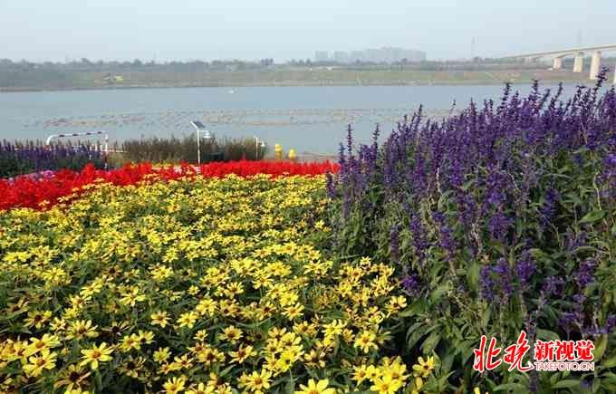 五一来北京丰台:赏花品尝民俗美食 开启一段多姿多彩的休闲之旅[墙根网]