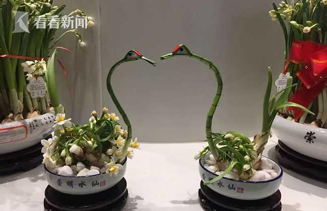 崇明水仙亮相北京世园会 为2021年花博会预热[墙根网]