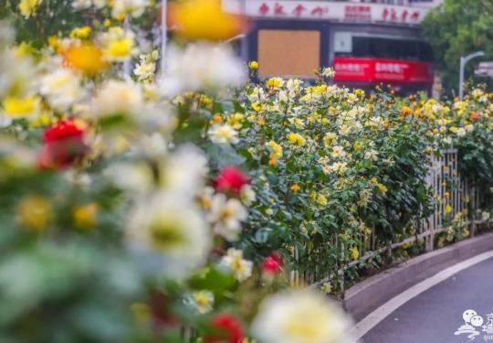 北京城内五月花海 哪一款是你的心头好?