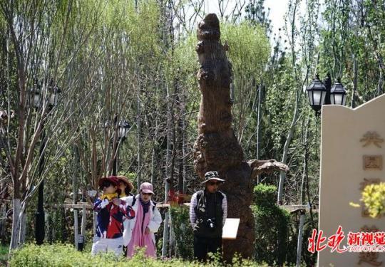 北京世园会新疆园展出枯胡杨木 其中一株有3000年历史