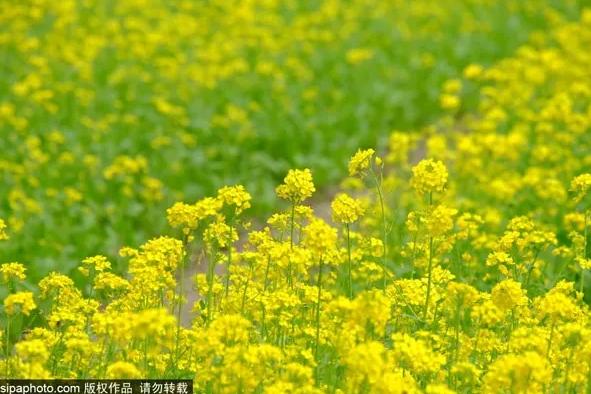 这些景点只有北京人知道!最美的5月都在这里,错过再等一年[墙根网]