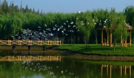 浦江游览崇明航线5月21日起试运营 一日游线出炉[墙根网]