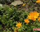 北京植物园扮靓世园会,分四期展示300余种中国特色珍稀植物