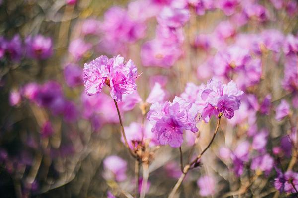 放歌朝阳大黑山——大黑山风景区2019春季旅行攻略[墙根网]