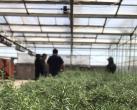 延庆建成北京最大香草类植物资源圃 有10余种在世园会上亮相