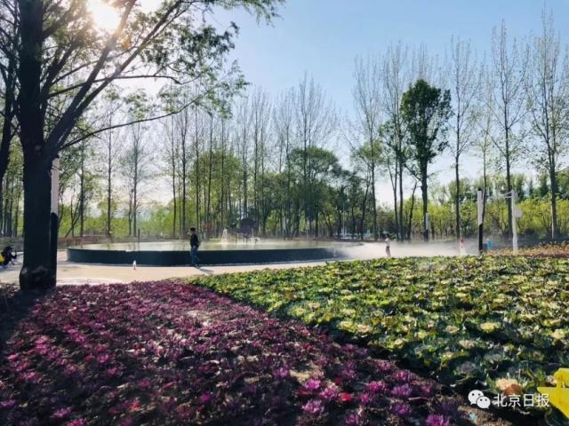 """北京世园会百蔬园里""""菜比花娇"""" 有哪些新鲜的亮点可""""采摘""""[墙根网]"""