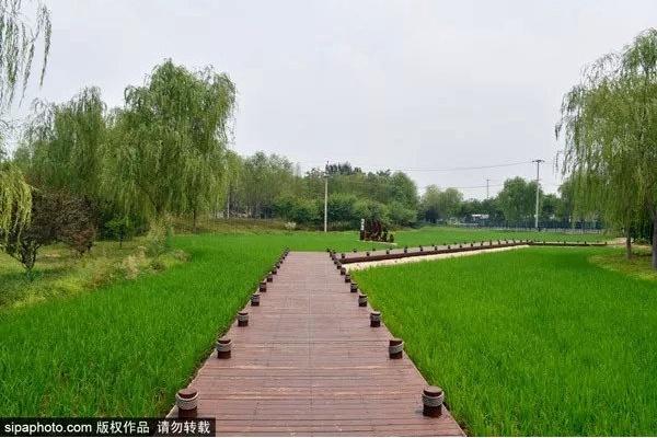 """北京西郊线地铁旁竟藏着一处免费的""""小江南""""![墙根网]"""