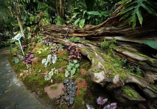 北京世园会植物馆:这里有阿凡达的奇幻世界
