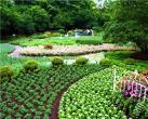 端午又添好去处 去芳香植物展闻大自然芬芳