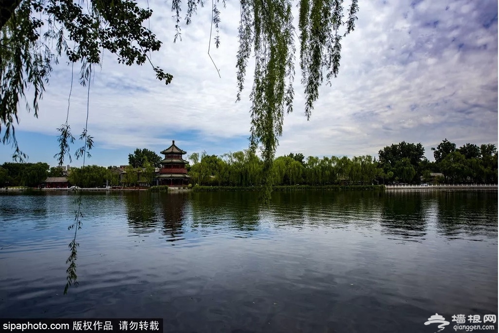 老北京才知道!6月消夏避暑看荷花,凉快还免费的地方就是……[墙根网]