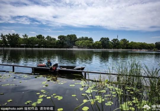 老北京才知道!6月消夏避暑看荷花,凉快还免费的地方就是……