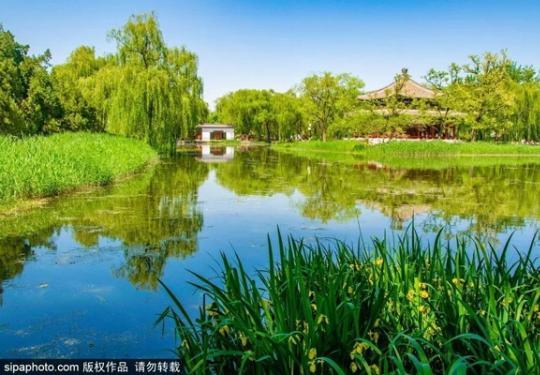 夏花绚丽、翠柳成荫!北京这个地方已经颜值爆表!