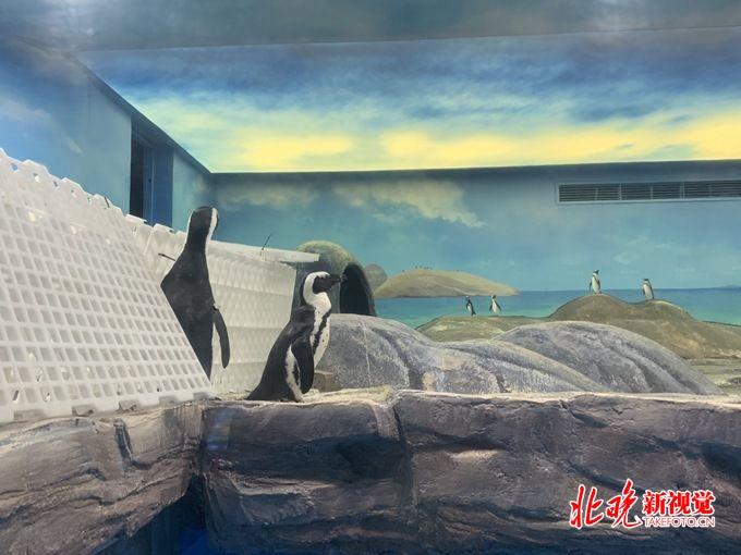 """企鹅来了!北京海洋馆打造""""非常部落狂欢季""""[墙根网]"""